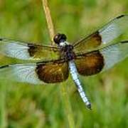 Dragon Fly Grass Poster