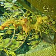 Dragon Seahorse Poster