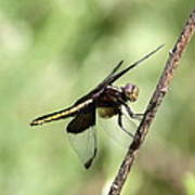 Dragonfly - Yellow Stripe Poster