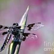 Dragonfly Bokeh Poster