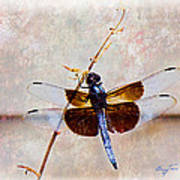 Dragonfly Clinging Poster