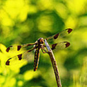 Dragonfly In Green Poster