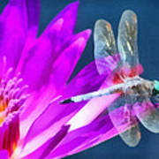 Dragonfly Lily Poster