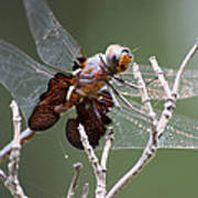 Dragonfly On The Tree Poster