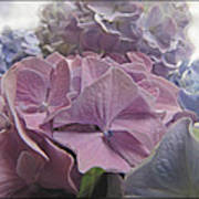 Dream Hydrangeas Poster