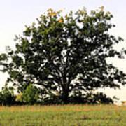 Dream Tree Poster