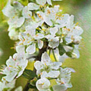 Dreamy Blossom. Poster