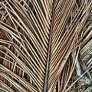 Dried Palm Fronds Poster