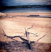 Driftwood 2 Lomo Poster