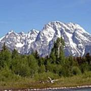 Driftwood And The Grand Tetons Poster