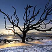 Driftwood Beach At Dawn Poster
