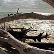 Driftwood Jungle II Poster