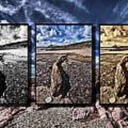 Driftwood Triptych Poster