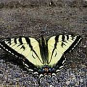 Driveway Butterfly Poster