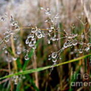Droplets On Grass Poster