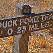 Duck Pond Trail Poster