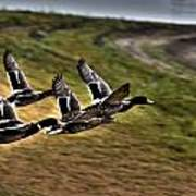 Ducks In Flight V5  Poster