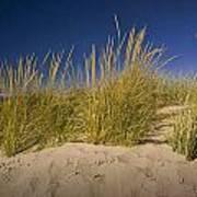 Dune And Beach Grass On Lake Michigan No.969 Poster