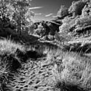 Dunes Path Poster