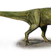 Duriavenator Hesperis, A Prehistoric Poster