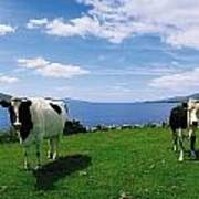 Durrus, Sheeps Head, Co Cork, Ireland Poster