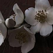 Dusk Blooms Poster
