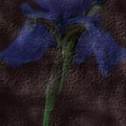 Dusty Iris Poster