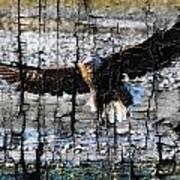 Eagle Imprint Poster