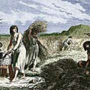 Early Humans Harvesting Crops Poster