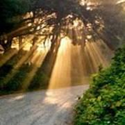 Early Morning Sunlight Poster