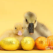 Easter Duckling And Gosling Poster