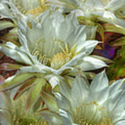 Easter Lily Cactus Bouquet Hdr Poster
