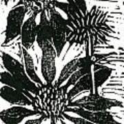 Echinacea Block Print Poster