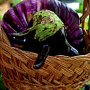 Eggplants From Sicily Poster
