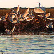 Egret And Ibis Party Poster