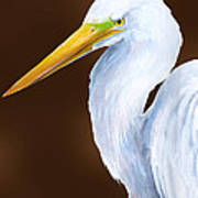 Egret Head Study Poster by Kevin Brant