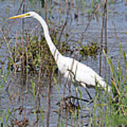 Egret Walking Poster