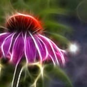 Electrified Coneflower Poster