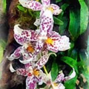 Elegant Beallara Orchid Poster