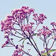 Elegant Pink Flowers. Poster