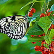 Elegant Rice Paper Butterfly On Berry Tree Poster