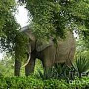 Elephant Beauty Poster