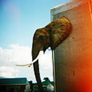 Elephant Box Poster
