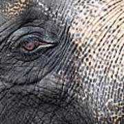 Elephant Close-up Portrait Poster