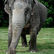 Elephant Greet Poster
