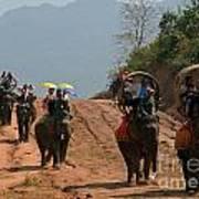 Elephant Rides Poster