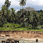 Elephants In The River Poster