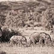 Elephants Walking In A Row Samburu Kenya Poster