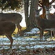 Eleven Deer Standing Poster