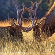 Elk 2 Elk Poster